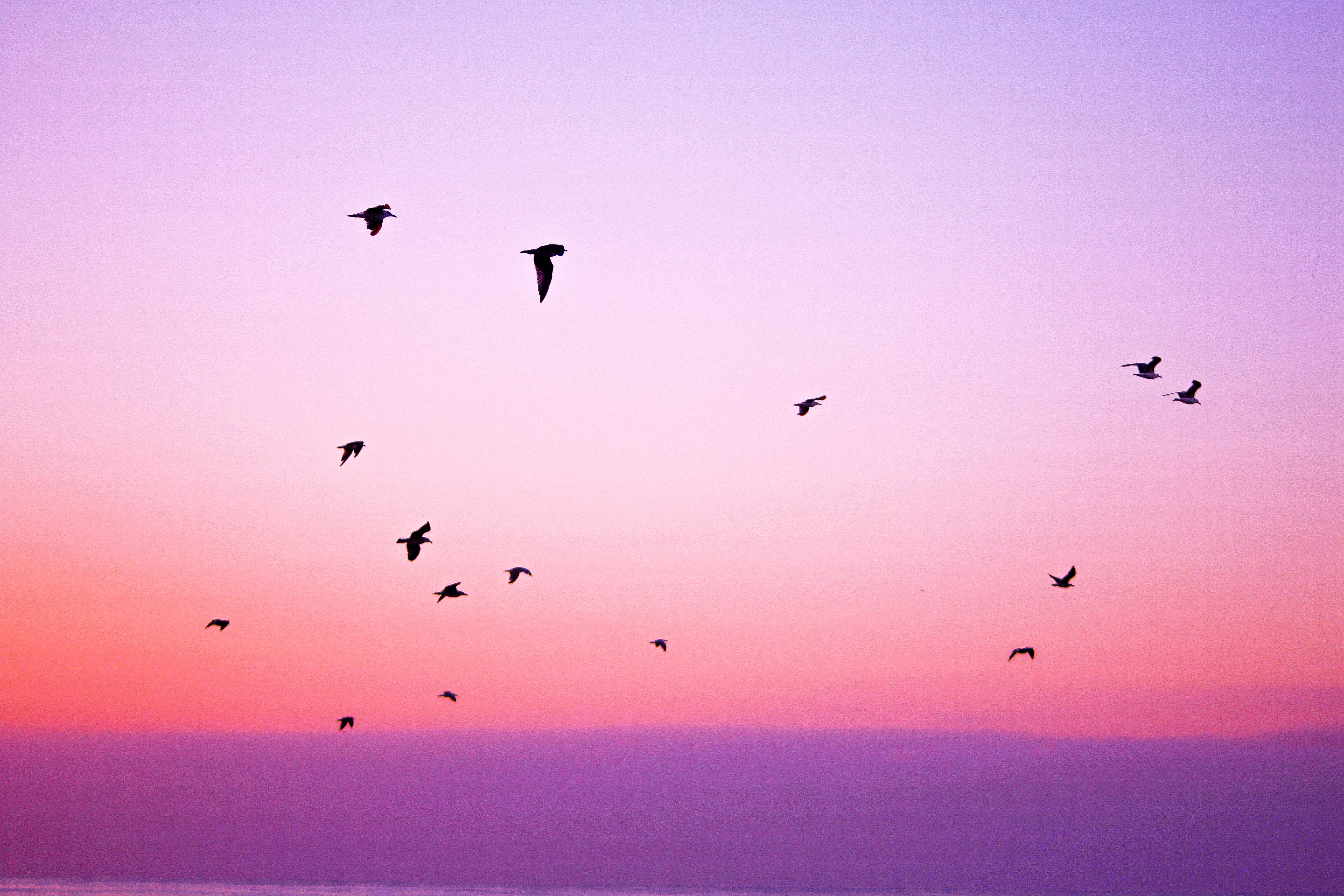 nature-sky-bird-animals-21261